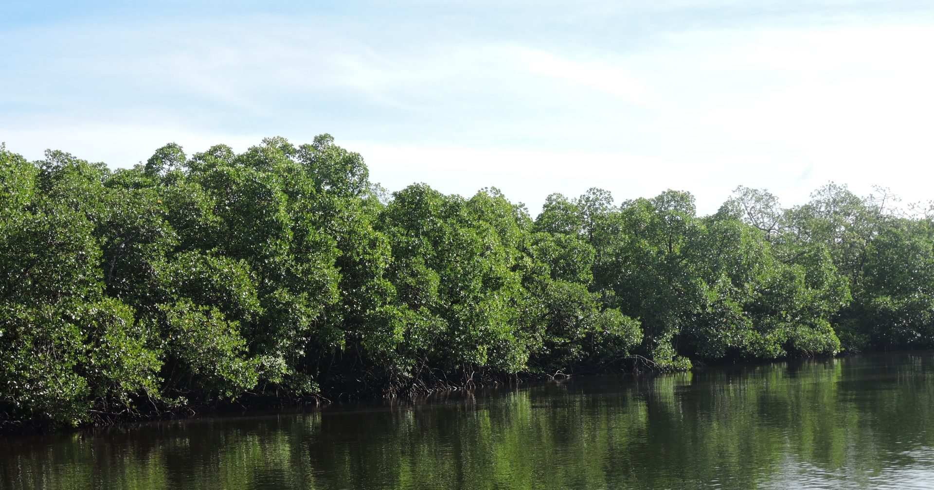 INTERNATIONAL CONFERENCE ON TROPICAL SILVICULTURE